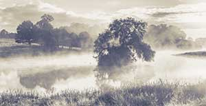 Mist on the Pond by Daisy Kane