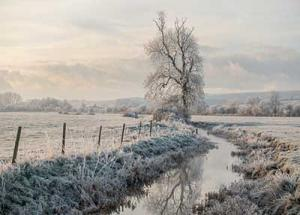Frosty Bramber Tree by Martin Tomes