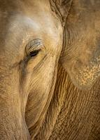 Elephant Abstract by David Seddon